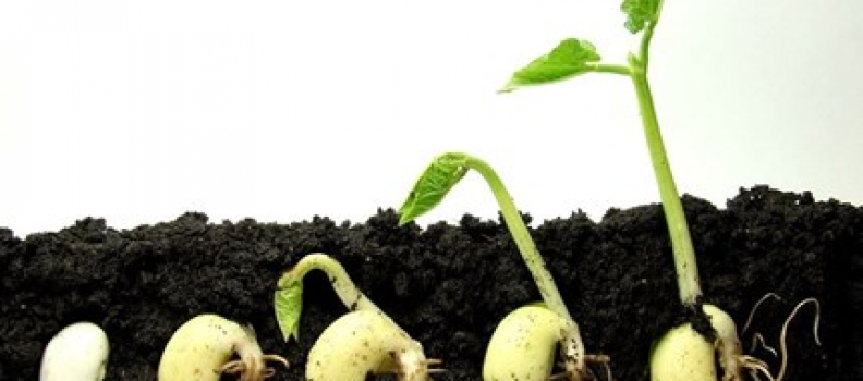 A Leader's Job Is To Plant Seeds!
